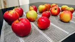 Apple picking (DavidSteele31) Tags: apples appletree garden picked foodanddrink theme red green ripe kitchen towel granite