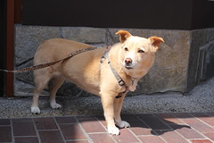 captive subject (vtpoly) Tags: dogs dog america losangeles california small patient pets polywoda