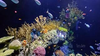 Great Barrier Reef, Diergaarde Blijdorp, Rotterdam, Netherlands - 5056