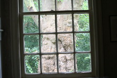 Through the Window (eyriel) Tags: window frame framing tree nature outdoor inside pane panes windowpanes