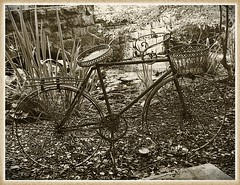I want to ride my bicycle .... HSS (cheltenhamgirl (Yvonne)) Tags: gardencentre plantholder bicycle slidersunday