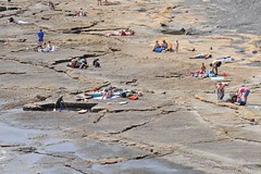 DSC_7084 (Phytophot) Tags: jurassiccoast isleofpurbeck kimmeridge bay rocks shale tourists sea sun children dogs
