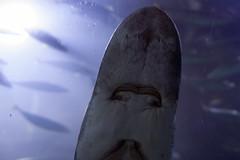 IMG_7400 (Malu Green!) Tags: sanfrancisco california califórnia eua usa aquarium aquário aquariumofthebay sanfranciscoaquarium fish color colores cores peixe aguaviva estreladomar seastar tubarão shark jellyfish jellies