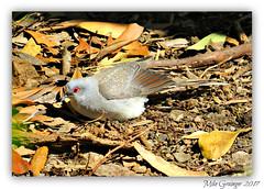 Diamond Dove. (mike 42) Tags: diamond dove s australia 20017