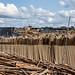 Bolaina sawmills, Pucallpa port