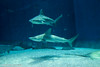 IMG_0661 (10Rosso) Tags: acqua acquario genova pesci pesce mare acquariodigenova aquarium genovaacquarium