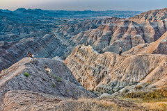 Lost sheep or lost man? (Pejasar) Tags: badlands southdakota erosion man bighornsheep animal mammals lost