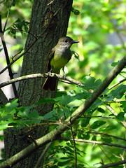 Bird IMG_7685 (Jennz World) Tags: ©jennifermlivick mountpleasantnaturepark mtpleasant ontario canada dragonfly dragonflies damselfly damselflies