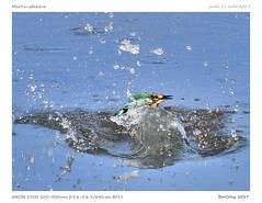 Martin-pêcheur | Kingfisher (BerColly) Tags: france paysbasque espagne spain plaiaundi oiseau bird martinpecheur water eau plongée diving pêche fishing bercolly google flickr abigfave