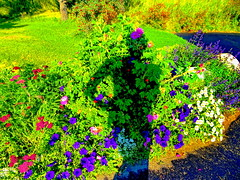 A Garden SP Series (+3) (peggyhr) Tags: peggyhr garden flowers sp series bluebirdestates alberta canada niceasitgets~level1 infinitexposurel1 groupecharliel1 visionaryartsgallerylevel1 alittlebitofsoaplevel1