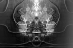 Le mystère de la fleur noire et le mal. (One-Basic-Of-Art) Tags: black white schwarz weis weiss grau gris grey noir blanc mono einfarbig monchrom monochrome chrome muster textures spiegelung fleur blume flower dunkel düster finster hell schön leuchtenddark darkest darkness illusion derbetrachterentscheidetwasersiesieht annewoyand woyand anne schnurr boden outdoor indoor face gesicht dumal mal böse schlecht finsternis dunkelheit evil devil teufel diablo faszination canon canoneos canoneos350d flickr 1basicofart 1basicifart onebasicofart oboa