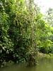 Rio Sarapiqui_47 (Thomas Jundt + CV) Tags: costarica heredia riosanjuan trinidad