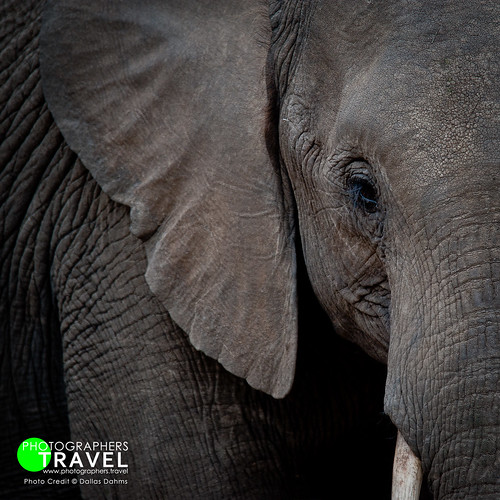 Elephant - Chobe 2015