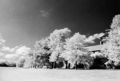 Hilly fields park (blackwoodse6) Tags: nikon ir infrared sky clouds trees monochrome london se13 se4 lewisham brockley nikonf3 film blackandwhite woodeffect southeastlondon londonparks ilfordsfx200 infraredphotography slr