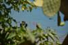Sperlonga, Italy (nielsenjeanette449) Tags: summer sommer italien italy ocean hav badedyr bader green grønt blå blue outdoor udenfor