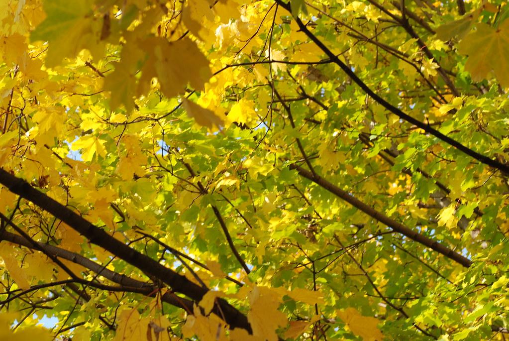 фото: Осеннее