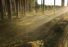 ...pride in the forest (srchedlund) Tags: uteistugan sweden skog forest pridecolors norrbotten furufjärden srchedlund lensflare backlight motljus sidoljus sidelight