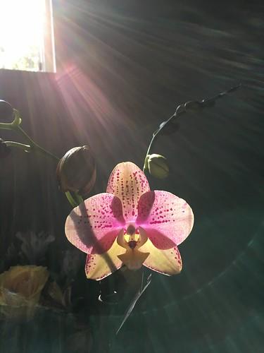 Flower Apparition