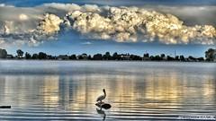 Chilling on Windsor Lake (CTfotomagik) Tags: windsor lake water pelican clouds bird wildlife colorado ripples reflection