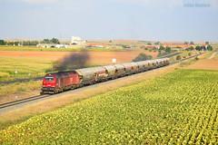 Cereal cereal (pipeviii) Tags: paisaje mercancías tren 6001 takargo cerealero cereal babilafuente bioetanol euro4000 vacio mercancíasvacío privadas privada pipeviii girasoles humo