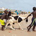 Children lead a Sheep into the Ocean for a Wash, Senegal