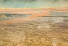 Grand Prismatic Spring (pdx_photoman) Tags: nationalpark yellowstone national park beauty geyser outdoors water calcium deposits feature flow flowing geological geology geothermal hiking hot mineral mound parks seep springs steam steaming thermal volcanic volcano warm wyoming