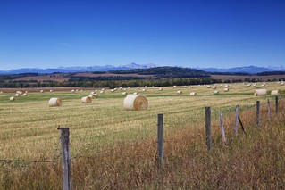 Bales and a fence