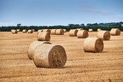 hay (scottprice16) Tags: england northumberland northumbria farm farming bales autumn harvest summer august activity land landscape field hay round boulmer longhoughton colour yellow straw fuji xt1 18135mm bokeh