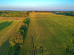 (Daniel000000) Tags: dji djispark spark drone uav field wisconsin light sunset sunlight green summer september corn rows tree trees horizon