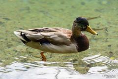 _DSC0051 (Marcelo Farah) Tags: plivitce jezera parquenacional zagreb croacia