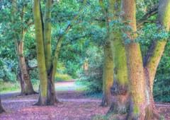* Impressionismo nel bosco * (argia world 1) Tags: alberi trees bosco wood parco park foresta forest erba gras foglie leaves sentiero path impressionismo impressionism
