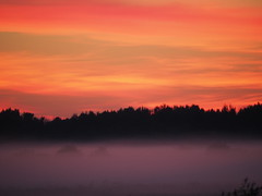 Foggy summer sunset (Alexey_Summer) Tags: olympus micro43 mirrorless m43 frog frogs nature naturelovers naturephotograph sunset countryside