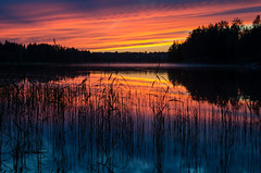 sunset (Stefano Rugolo) Tags: stefanorugolo pentax k5 smcpentaxda1855mmf3556alwr sunset red blue reflections sky clouds landscape reeds hälsingland sweden sverige water grass tree lake serene forest