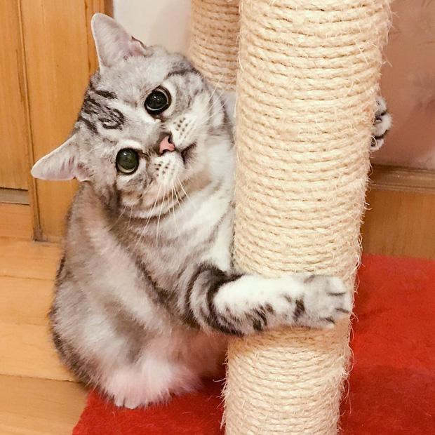 Nhìn bộ mặt buồn thiu như mất sổ gạo của boss mèo đáng yêu, con sen nào cũng muốn ôm lấy một cái - Ảnh 15.
