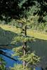 EOG-17.jpg (Joel Spooner Photography) Tags: arblife arborist bc expeditionoldgrowth joelspooner joeliphoto climbtrees exploretrees explorebc inspire learntoclimb oldgrowth treeclimbing