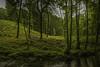Watersmeet-WoodsAcrossRiver-3-LR (Frank Etchells) Tags: water river devon watersmeet nationaltrust nt