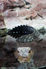 IMG_0713 (10Rosso) Tags: acqua acquario genova pesci pesce mare acquariodigenova aquarium genovaacquarium