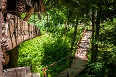 arboretum (MichalKondrat) Tags: drzewa sudety polska 2017 natura kotlinakłodzka pejzaż masywśnieżnika sierpień przyroda lądekzdrój zieleń dolnośląskie góry arboretum krajobraz