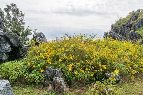doi pha tang - thailande 27