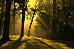 possibility (joy.jordan) Tags: trees light sunrise shadows leaves nature woods mist sunrays