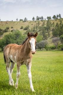 Mustang Colt with Heterochromia,