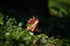 Journey through the bushes (Nikita Vasiliev) Tags: origami origamiart paper paperart sergeyyartsev hedgehog outdoor nature sun daylight