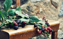 some black....some red....some green...,-) (SpitMcGee) Tags: brombeeren blackberry stillleben stilllife ernten toharvest inmygarden spitmcgee