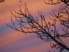 Sunset 20150815 (caligula1995) Tags: 2015 clouds plumtree smoke sunset