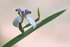 Flor (ruimc77) Tags: nikon d810 tamron sp 70200mm f28 di vc usd flor flower barbalha cariri ce ceara ceará brasil brazil macro close up color cor bokeh tamronsp70200mmf28divcusd nikond810 bresil brèsil 巴西 ブラジル البرازيل ברזיל brazilië brasilien бразилия brasile 브라질