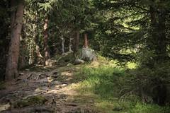 Une forêts pleine d'écureuils (bulbocode909) Tags: valais grimentz bendolla forêts arbres sentiers valdanniviers montagnes nature vert cabanedesbecsdebosson