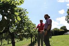 File416 (UGA CAES/Extension) Tags: grapes ugaextension cranecreekvineyards wine viticultureteam viticulture northgeorgiavineyards vineyards vines georgiawine uga