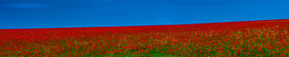 Blue, Red and Green
