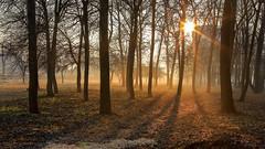 April. Morning. Fog. (Unicorn.mod) Tags: 2017 colors landsape cityscape morning fog sunlight lipetsk canoneos6d canon samyang35mmf14asumc samyangmf35mmf14edasumcae myfocus samyang