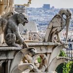 Notre Dame-9979 thumbnail